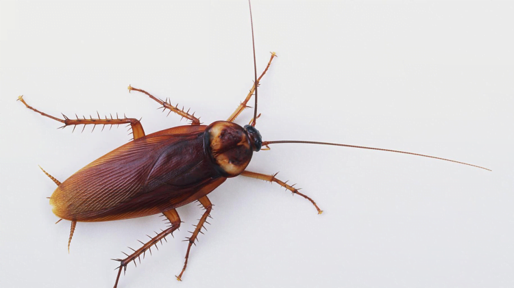 5 Major Health Problems Caused By Cockroaches and How to Avoid Them